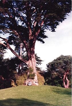 Steven - Cypress - GG Park