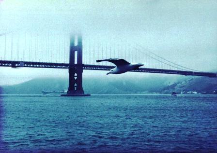 Steven - seagull 1980