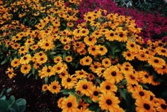 flowers botanic gardens denver