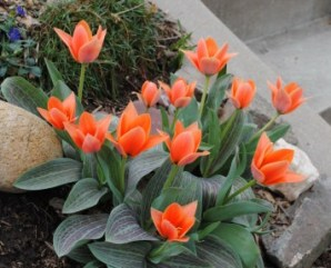 flowers - lia
