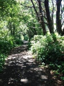 Nature Trail - Salishan